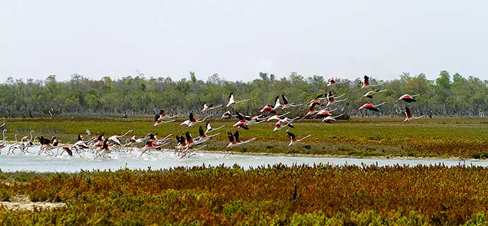 Belo sur mer : excursions flamands roses